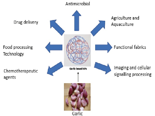 Biomedical applications of garlic based nanoparticles