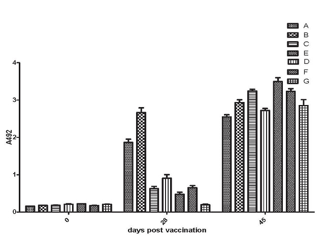 Mean OD values of FMD Type A specific IgG1 antibody response of various vaccinated groups of guinea pigs at different time intervals