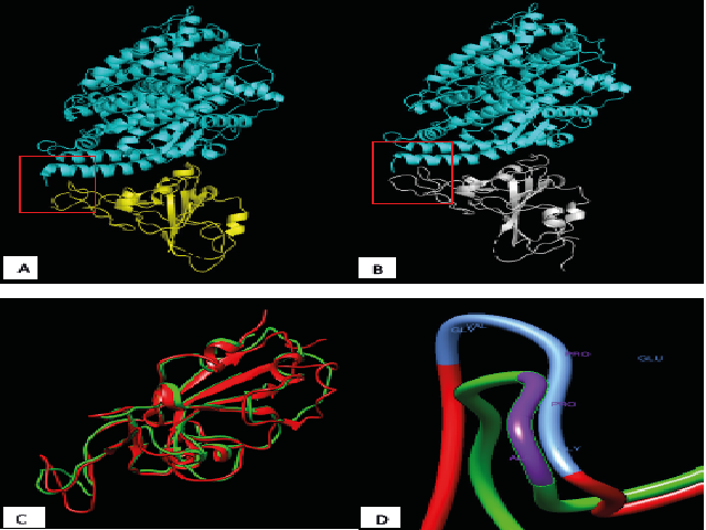 SARS-CoV RBD binding to ACE-2